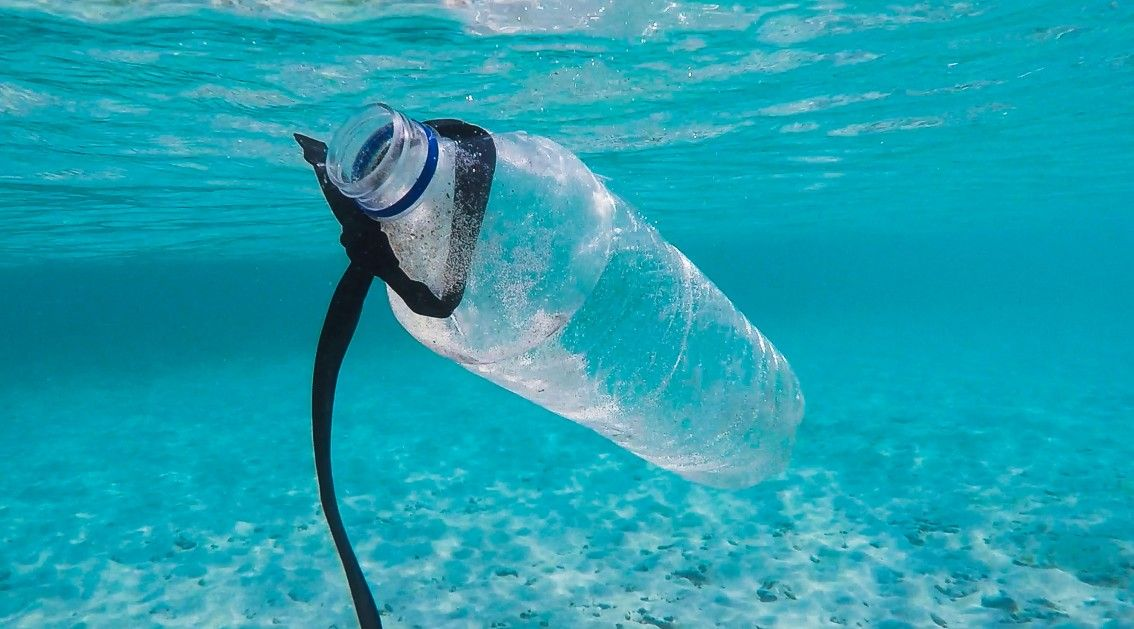 Vamos salvar os Oceanos, para podermos salvar o nosso futuro!