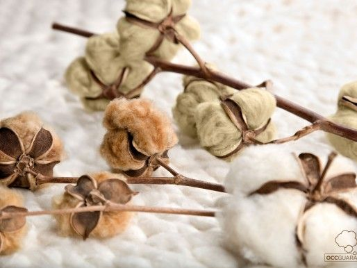 All about organic cotton